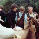 THE BEACH BOYS: De beestenbende van Pet Sounds